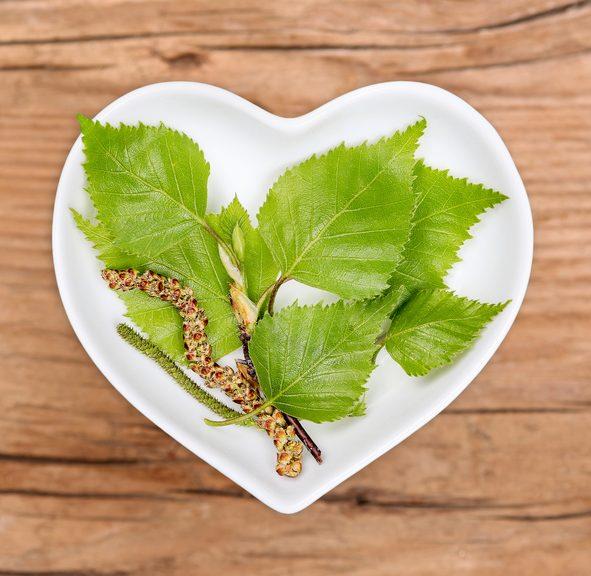 Le bouleau votre partenaire pour mincir les plantes bien for Plante pour mincir